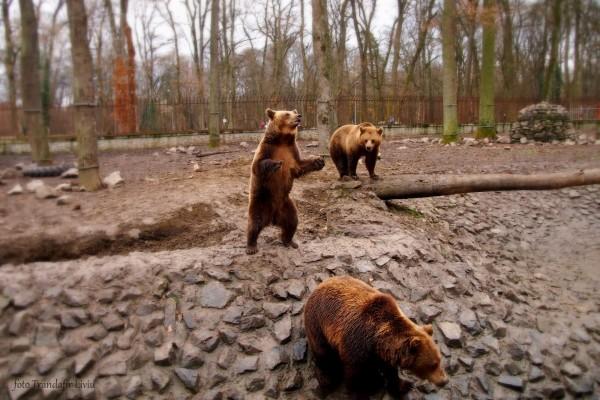 Gradina Zoo Timisoara