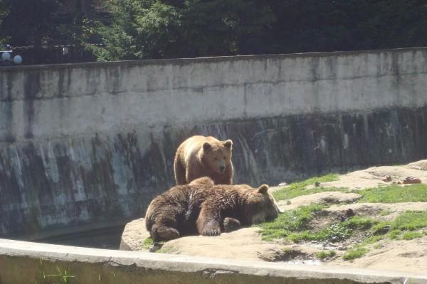 Zoo Brasov-1