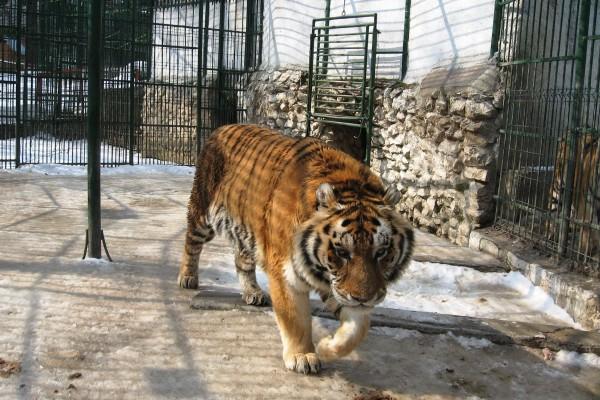 Zoo Brasov-2